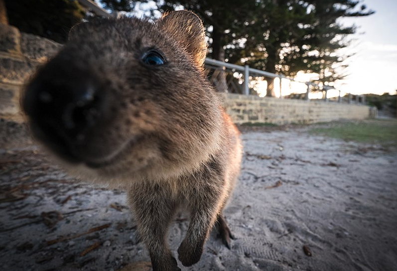 Hedgehogs v. Quokkas: How doctoral researchers can engage with industry